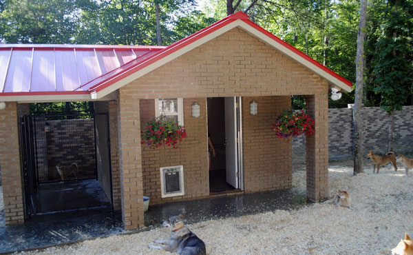 A Grand Dog House For The Heavy Duty Dog Door To Perform Gun Dog